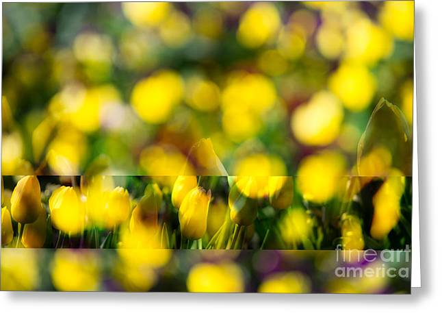 Yellow Tulip Mix Greeting Card by Sonja Quintero