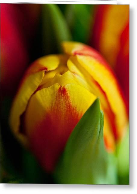 Yellow Tulip Greeting Card by Sabine Edrissi