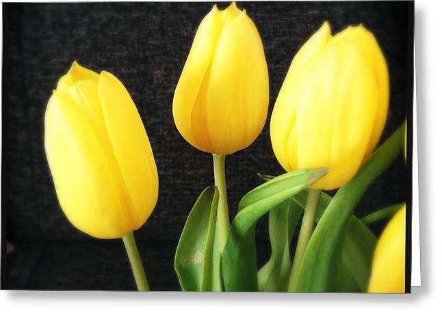 Yellow Tulips Black Background Greeting Card by Matthias Hauser