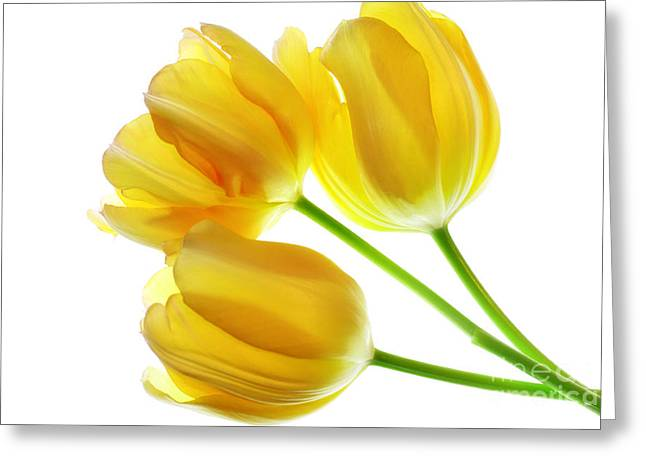 Yellow Tulips Greeting Card by Charline Xia