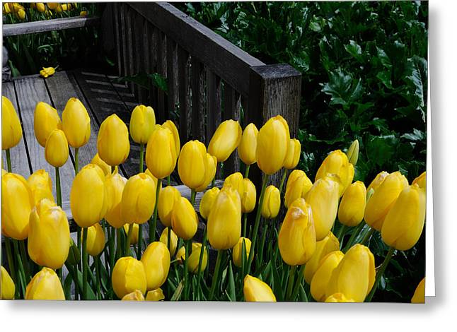 Greeting Card featuring the photograph Yellow Tulips by Haleh Mahbod