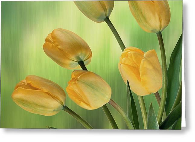 Yellow Tulips Greeting Card by Nina Bradica