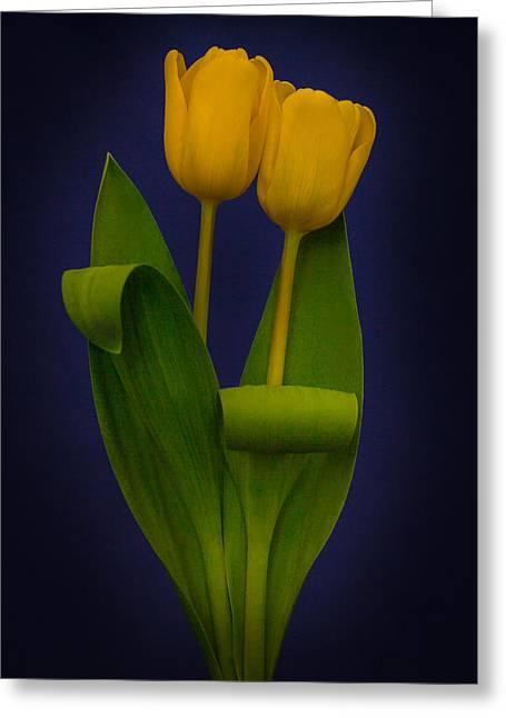 Yellow Tulips On A Blue Background Greeting Card by Eva Kondzialkiewicz