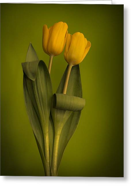 Yellow Tulips On A Green Background Greeting Card by Eva Kondzialkiewicz