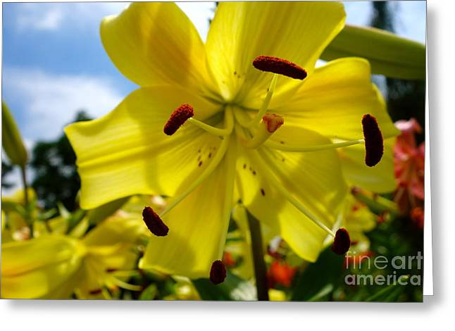 Yellow Whopper Lily 2 Greeting Card