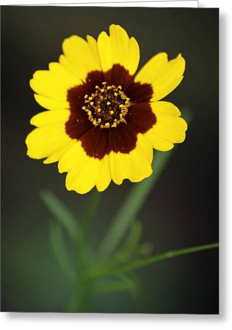 Yellow Wild Flower Greeting Card