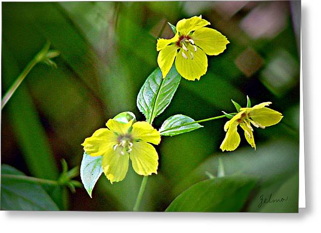 Yellow Wildflowers Greeting Card by Zelma Hensel