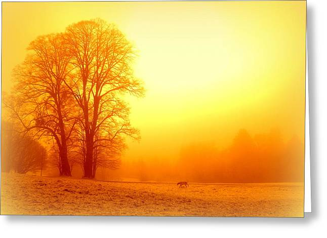Yellow Winter Sunrise Greeting Card by The Creative Minds Art and Photography
