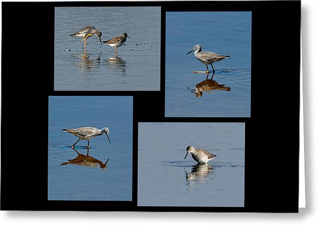 Yellowlegs Collage Greeting Card by Dawn Currie