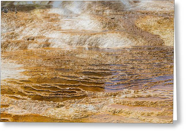 Yellowstone Gold Greeting Card