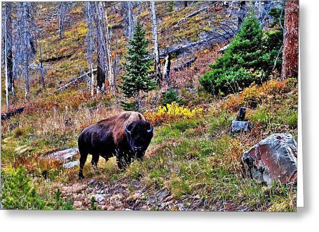 Yellowstone Bison Greeting Card by Benjamin Yeager