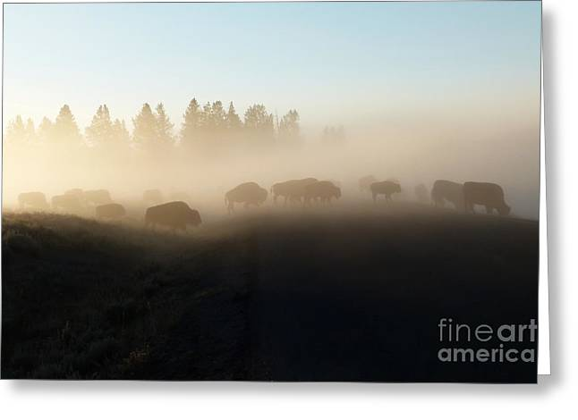 Yellowstone Bison In Early Morning Fog Greeting Card by Bob and Nancy Kendrick