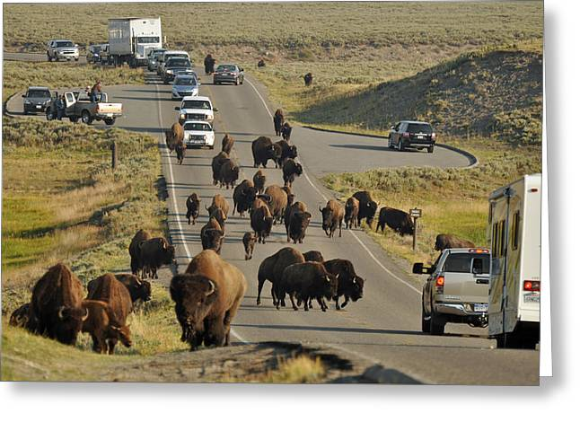 Yellowstone Bison Jam Greeting Card