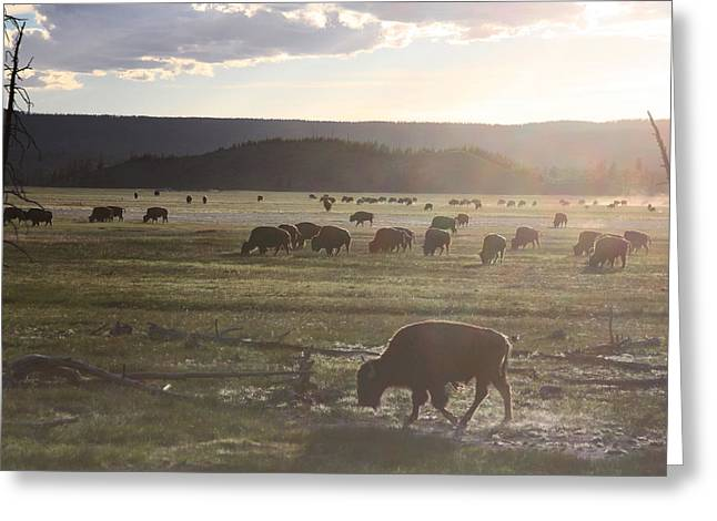 Yellowstone Bison Near Lower Geyser Basin Greeting Card