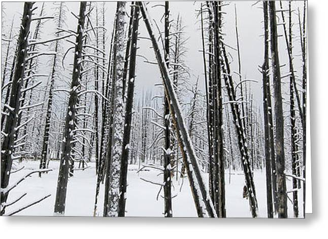 Yellowstone Bobby Sox Trees Greeting Card