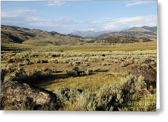 Yellowstone Landscape Greeting Card by Sophie Vigneault