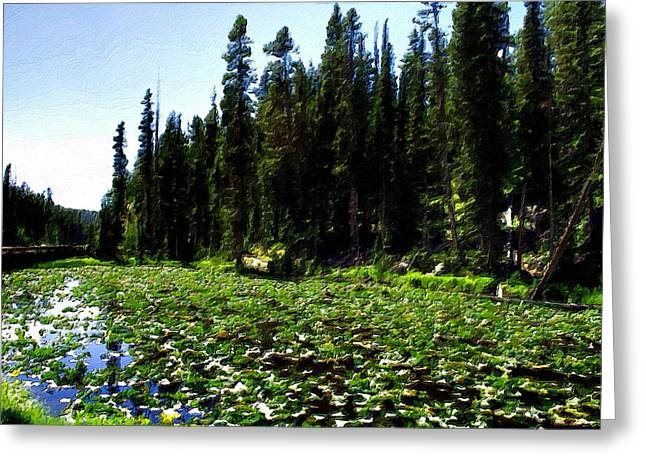 Yellowstone Lily Pads  Greeting Card