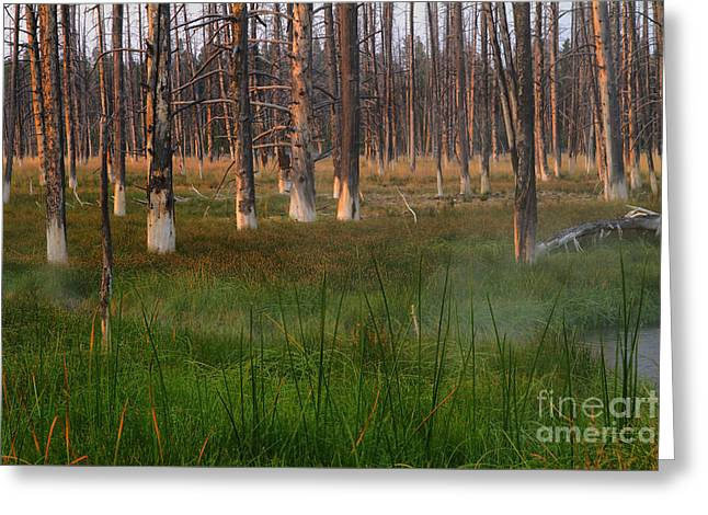 Yellowstone Mysterious Morning Greeting Card by Teresa Zieba