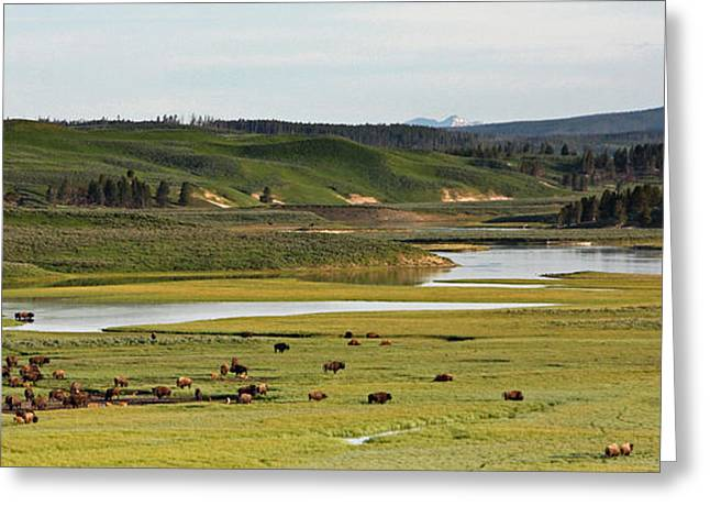 Yellowstone River In Hayden Valley In Yellowstone National Park Greeting Card