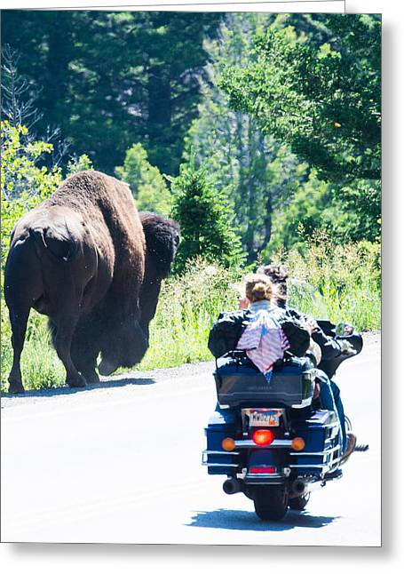 Yellowstone Road Hog Greeting Card