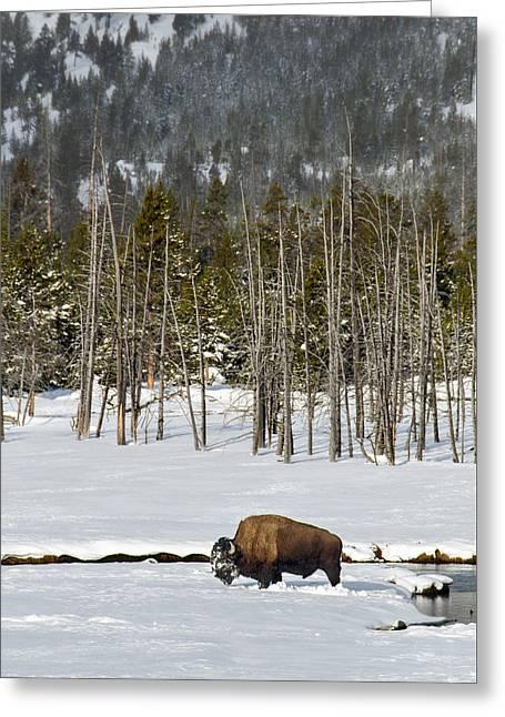 Yellowstone Winter Greeting Card
