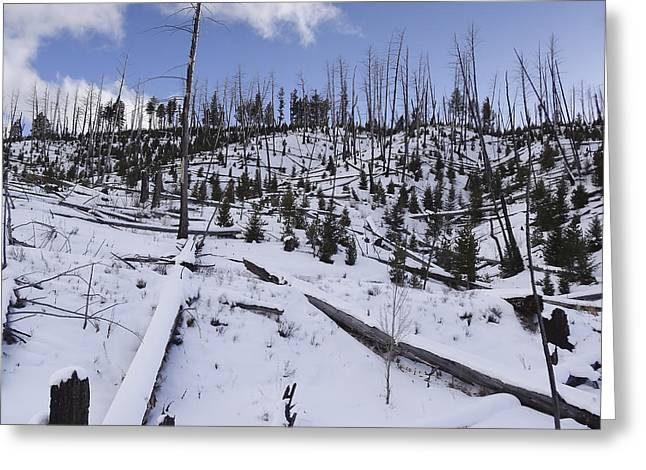 Yellowstone Winter Greeting Card by David Yack
