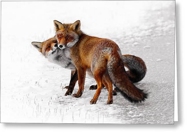 Yin Yang _ Red Fox Love Greeting Card