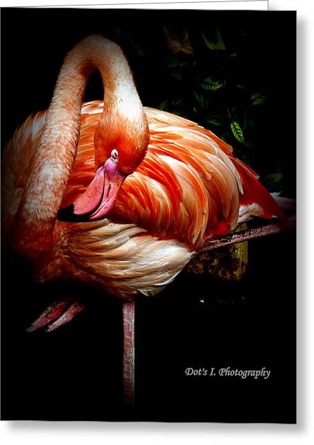 Yoga Flamingo Greeting Card by Dorothy Hilde