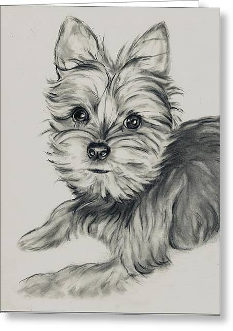 'yorkie' Greeting Card by Barb Baker
