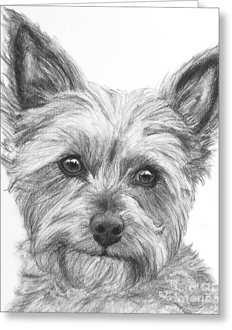 Yorkie Drawing Greeting Card