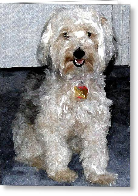 Yorkipoo Dog Greeting Card by Olde Time  Mercantile