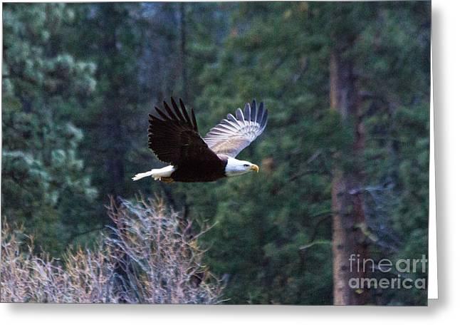 Yosemite Bald Eagle Greeting Card