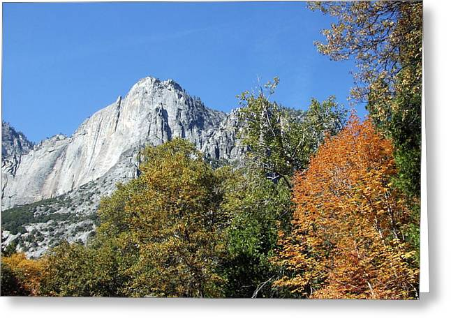 Greeting Card featuring the photograph Yosemite Trees by Richard Reeve