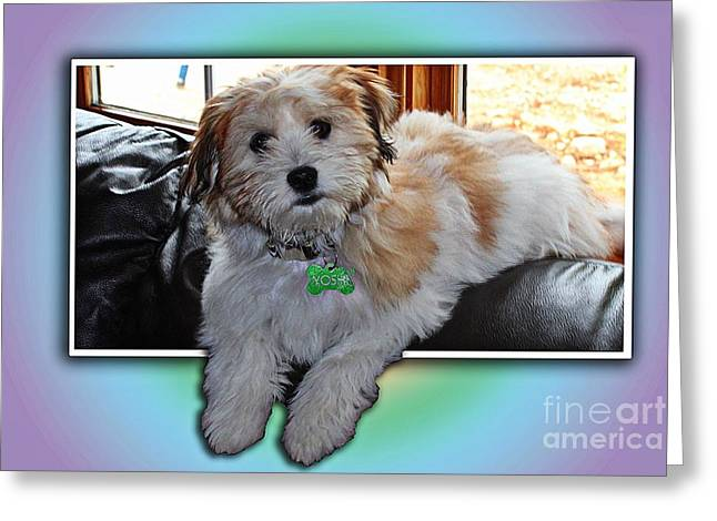 Yoshi Havanese Puppy Greeting Card by Barbara Griffin