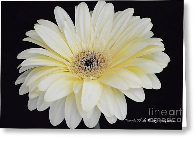 Greeting Card featuring the photograph You Are Loved by Jeannie Rhode