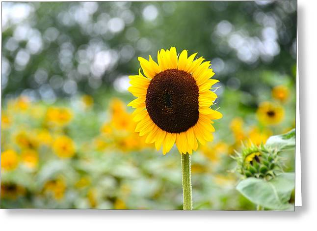 Greeting Card featuring the photograph You Are My Sonshine by Linda Mishler