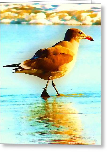 You Are The Only Gull For Me Greeting Card by Brian D Meredith