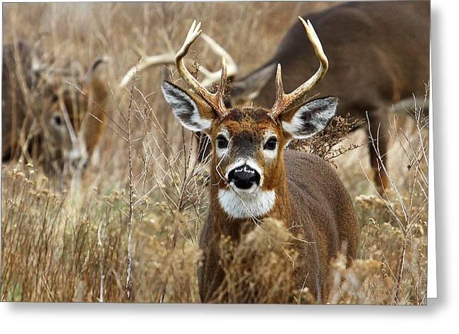 You Lookin At Me? Greeting Card by Butch Lombardi