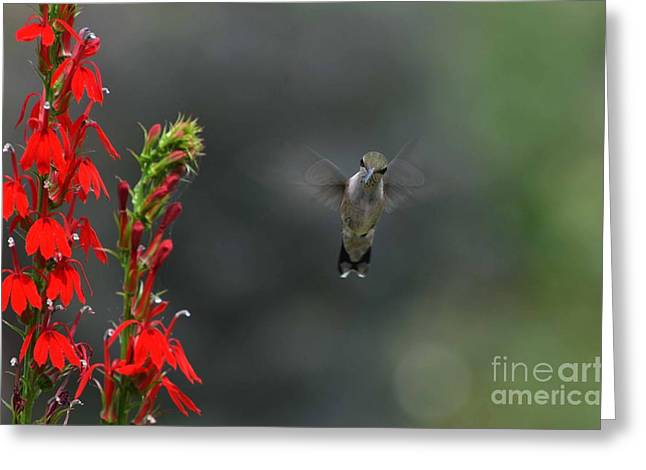 Greeting Card featuring the photograph You Looking At Me by Judy Wolinsky