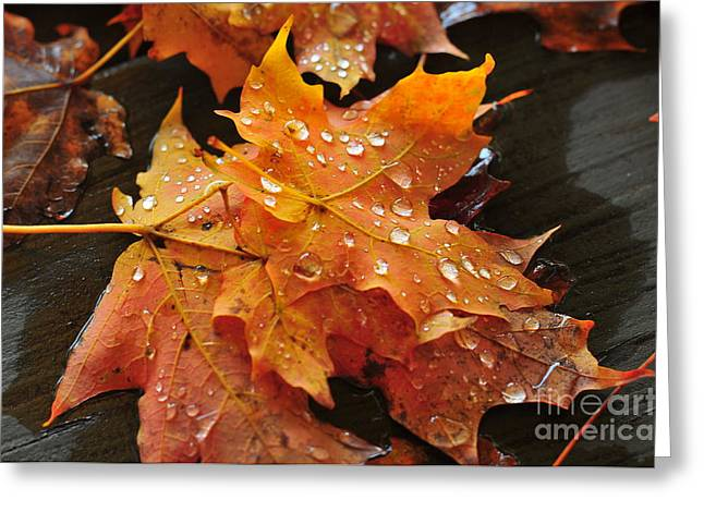 You Waited For Me To Fall Greeting Card by Catherine Reusch Daley