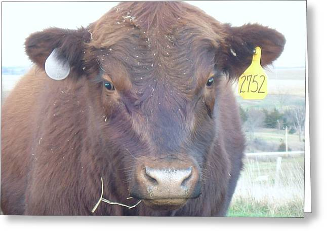 Greeting Card featuring the photograph Young Angus by J L Zarek
