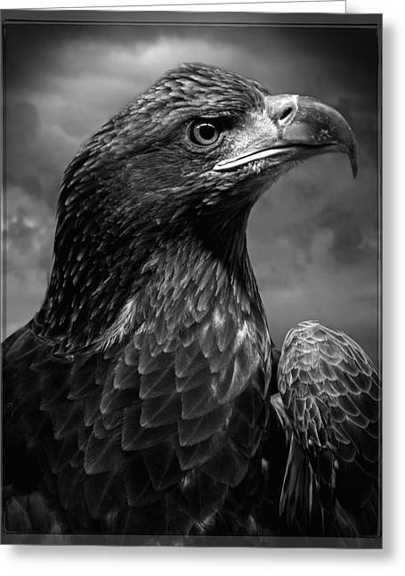 Young Bald Eagle V4 Greeting Card by F Leblanc