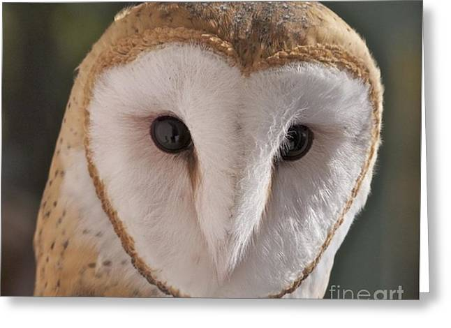 Young Barn Owl Greeting Card
