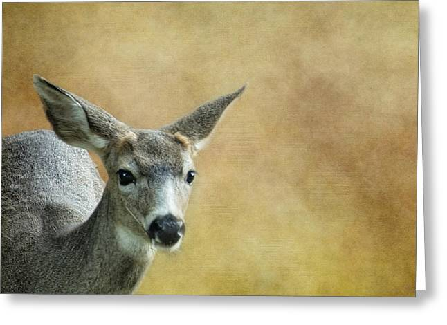 Young Buck Greeting Card by Belinda Greb