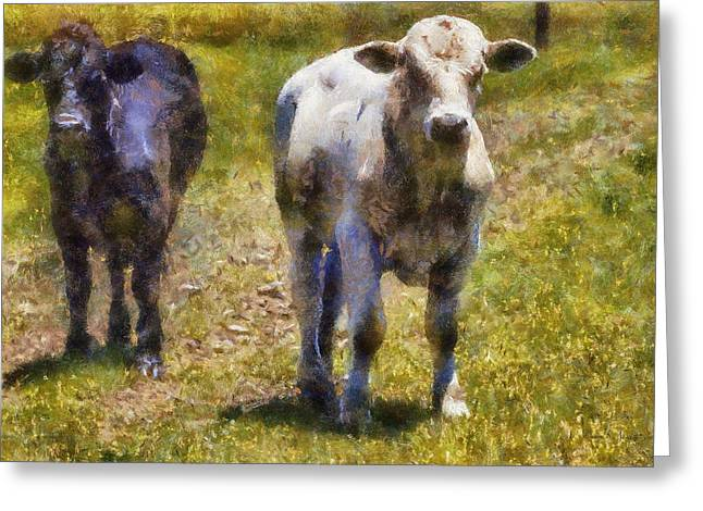 Young Bulls Greeting Card by Barry Jones