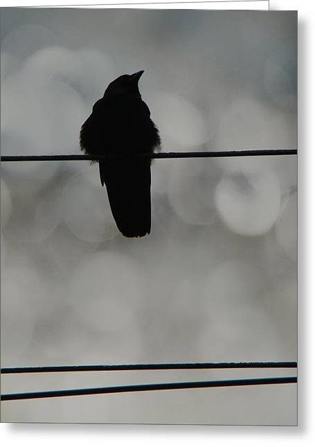 Monochrome Young Crow Greeting Card