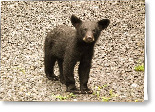 Young Cub Greeting Card by Jan Dappen