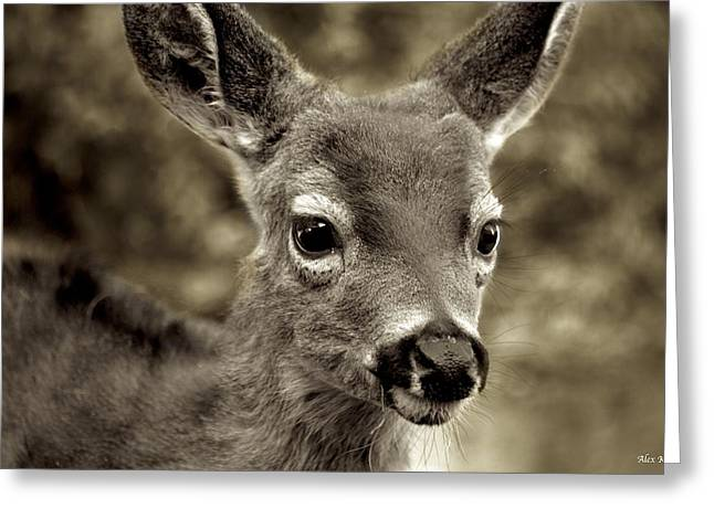 Young Curious Deer Greeting Card by Alex King