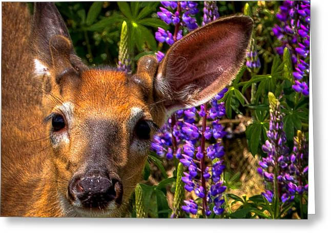 Young Deer On The Hillside Greeting Card by David Patterson