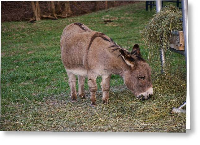 Young Donkey Eating Greeting Card by Chris Flees
